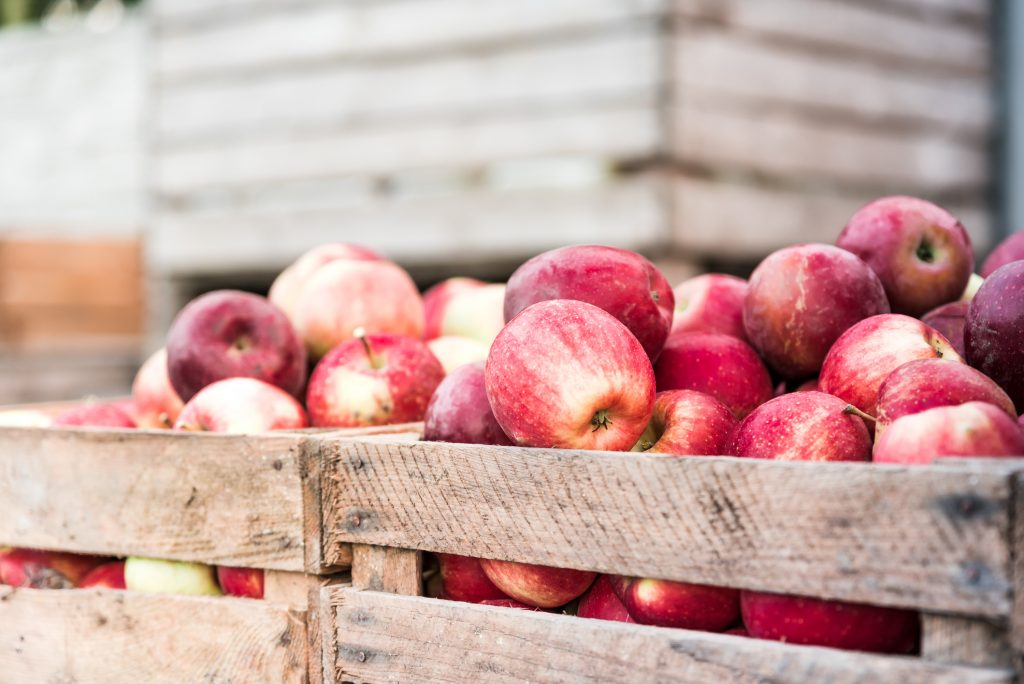 Crate of harvested apples