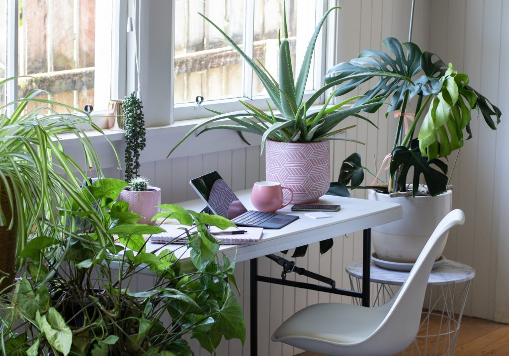 Indoor plants near a desk adding greenery and life to technology